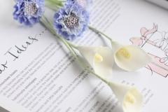 calla lily & scabiosa